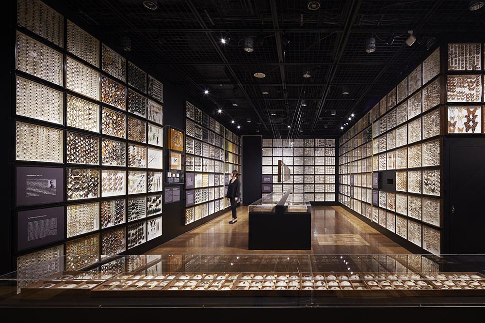 -Treasured Entomology Collection of The University of Tokyo spanning the Edo to Heisei eras-